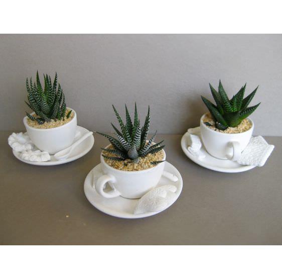 Tazza da Tè con pianta grassa