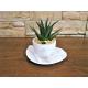 Tazza caffè con pianta grassa base ovale